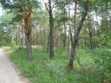 Szczegóły oferty - Działka Sprzedaż, legionowski Wieliszew, Numer oferty: 7553